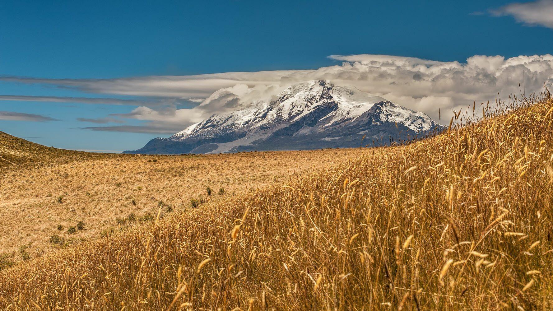 Cayambe volcano and Andean paramo