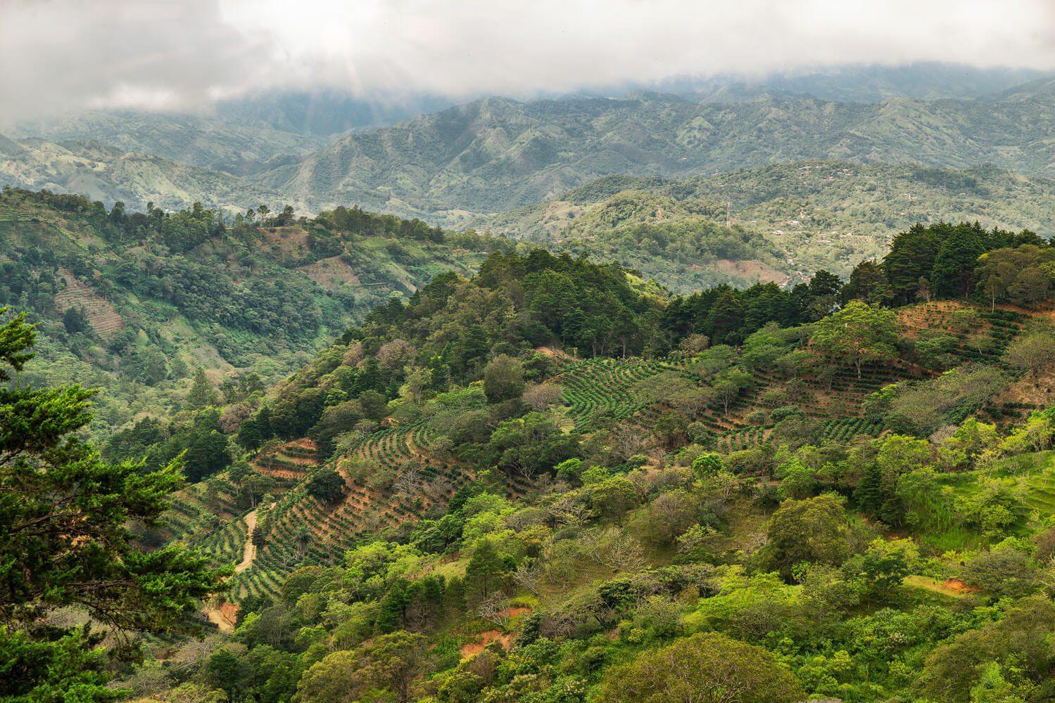 Nacientes Palmichal coffee plantations